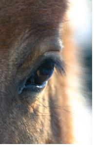Animal Communication FAQs