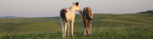 Animal Communicator2 FAQs