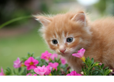 oil_kitten